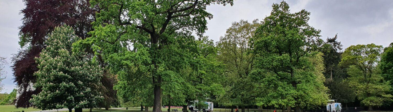 baten van bomen