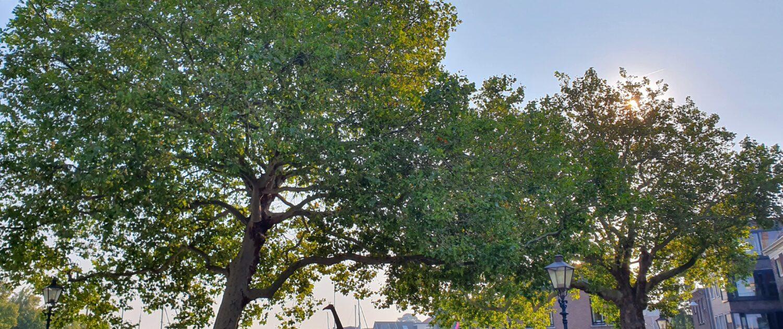 Bomen en klimaat