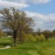 waardevolle bomen golfbaan